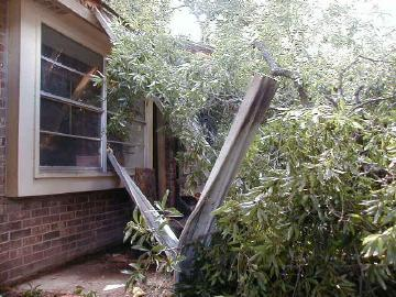 crushed aviary after tree removed
