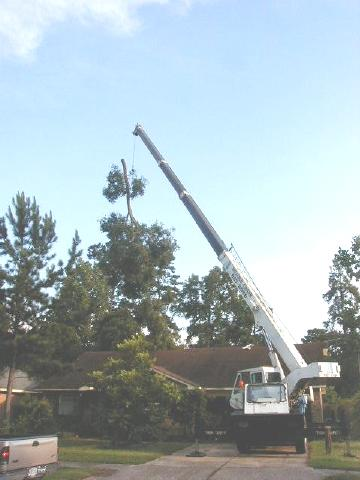 oak branch being craned over the house