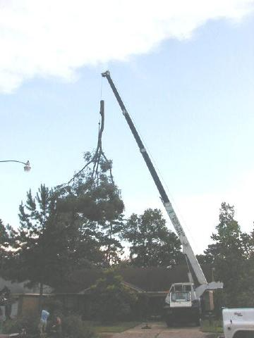 oak branch being craned over house