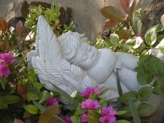 one of many angel and cherub statues in the garden at the gables inn