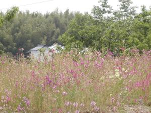 pink flowers near pond