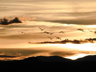 bosque del apache, sunset