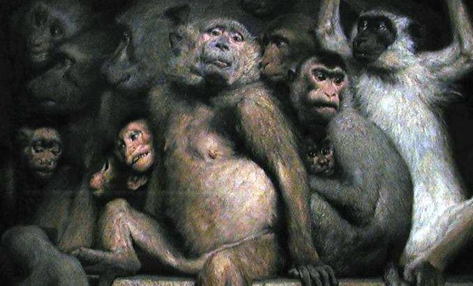 monkeys as judges of art