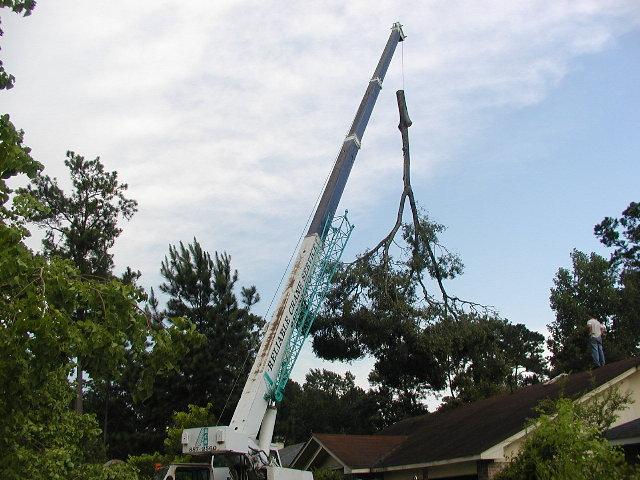 great big crane