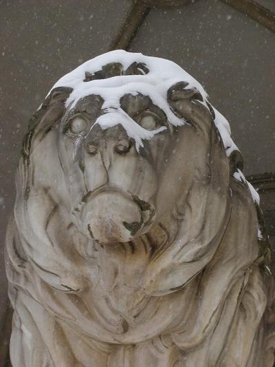 detail, lion in snow, odeonplatz, munich, bavaria