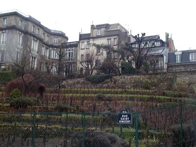 old vineyard across from Picasso pub, Montmartre, Paris