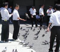 feeding pigeons at nishi hogan-ji