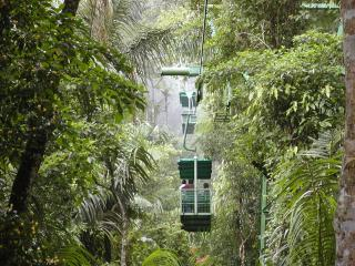 aerial tram over the rainforest